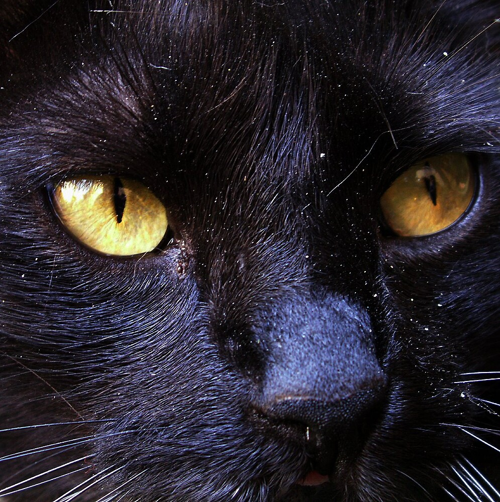 Yellow eyes by Sorin  Reck