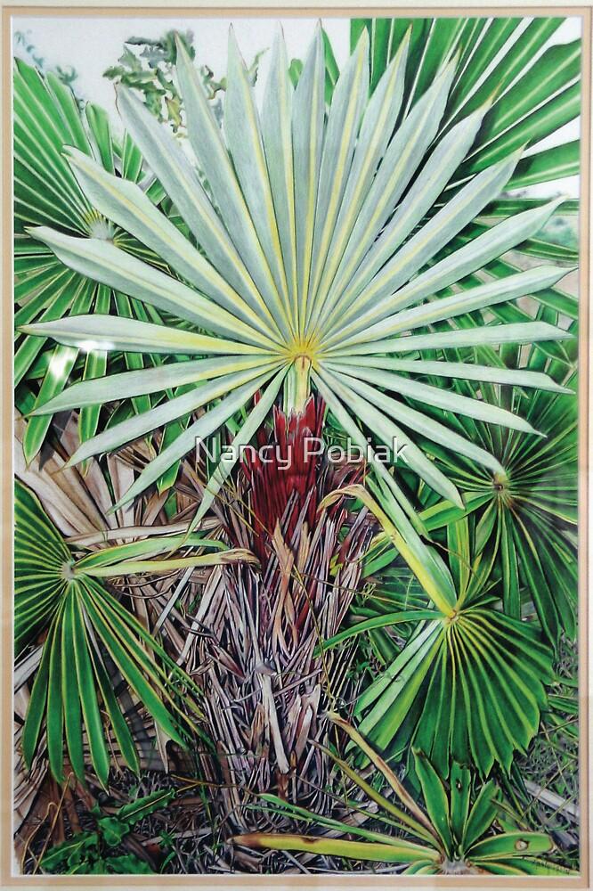 Cocotrhinax Garciana by Nancy Pobiak