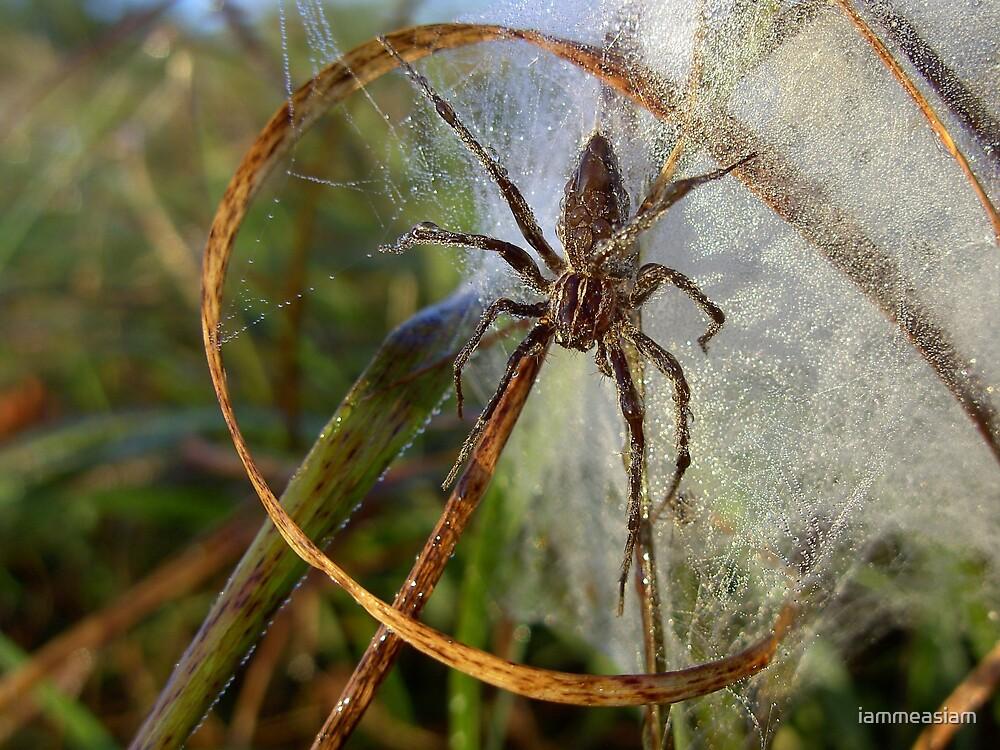 Spider  by iammeasiam