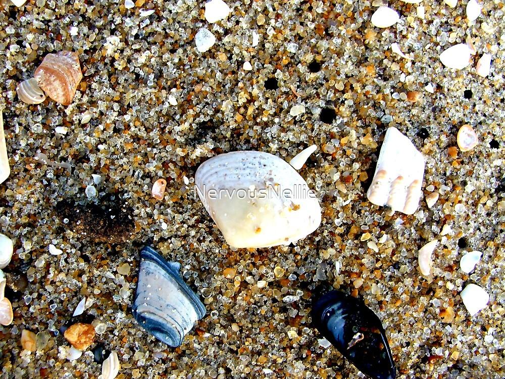 Seashells by NervousNellie