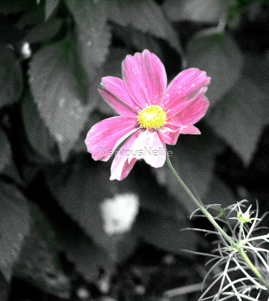 Pink Flower by NervousNellie