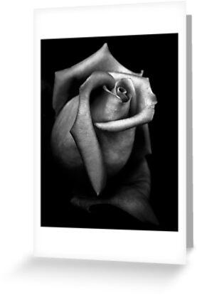 Stone Rose by Daniel  Rarela