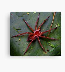 Huntsmen Spider Canvas Print