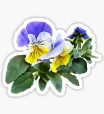 Group of Yellow and Purple Pansies Sticker