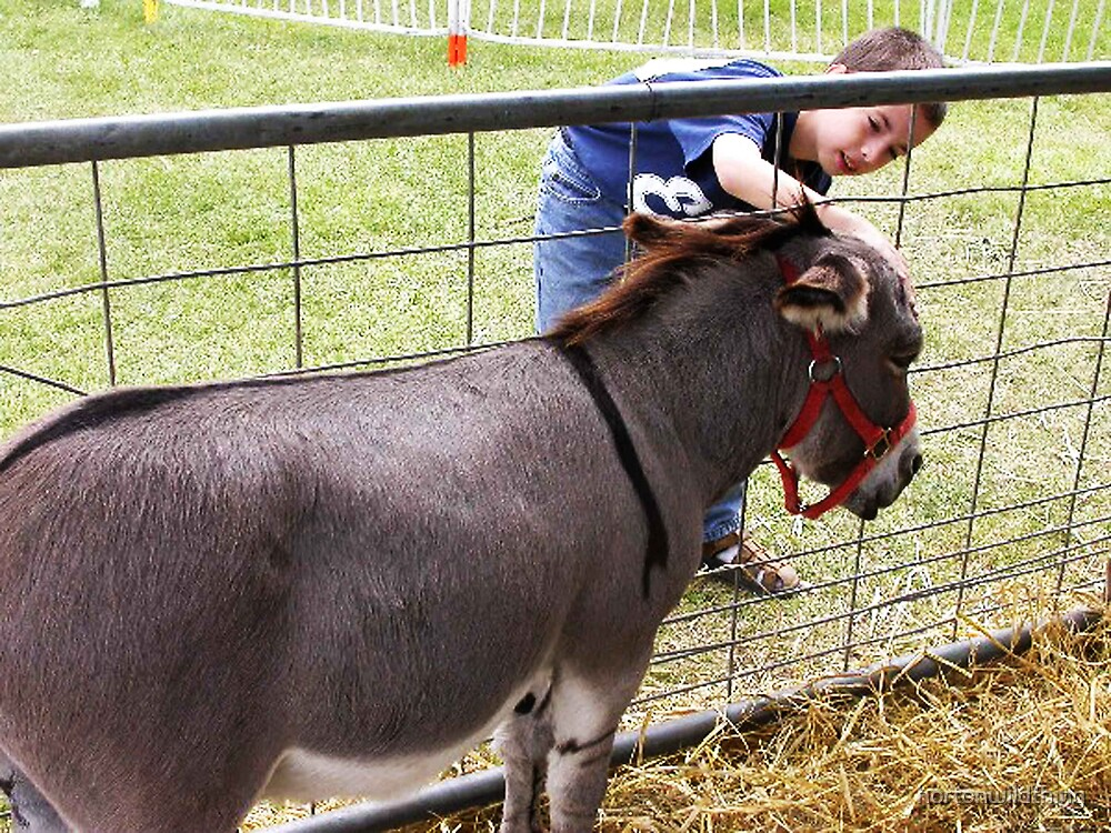 donkey love..   by hortonwildthing