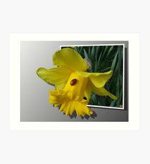 Ladybird on a Daffodil  Art Print