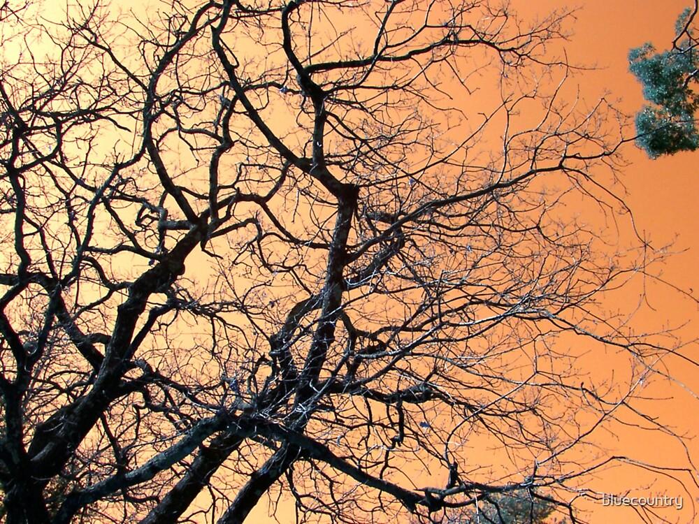 Wiry tree by bluecountry