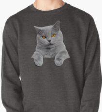 British Shorthair Cat Pullover