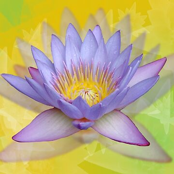 Crazy about lotus by CCWriter