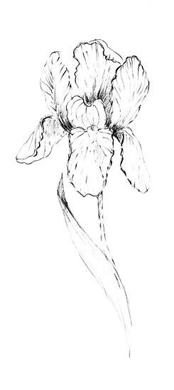 Iris flower. by Alexandra Iv.