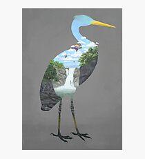 Cranescape Photographic Print