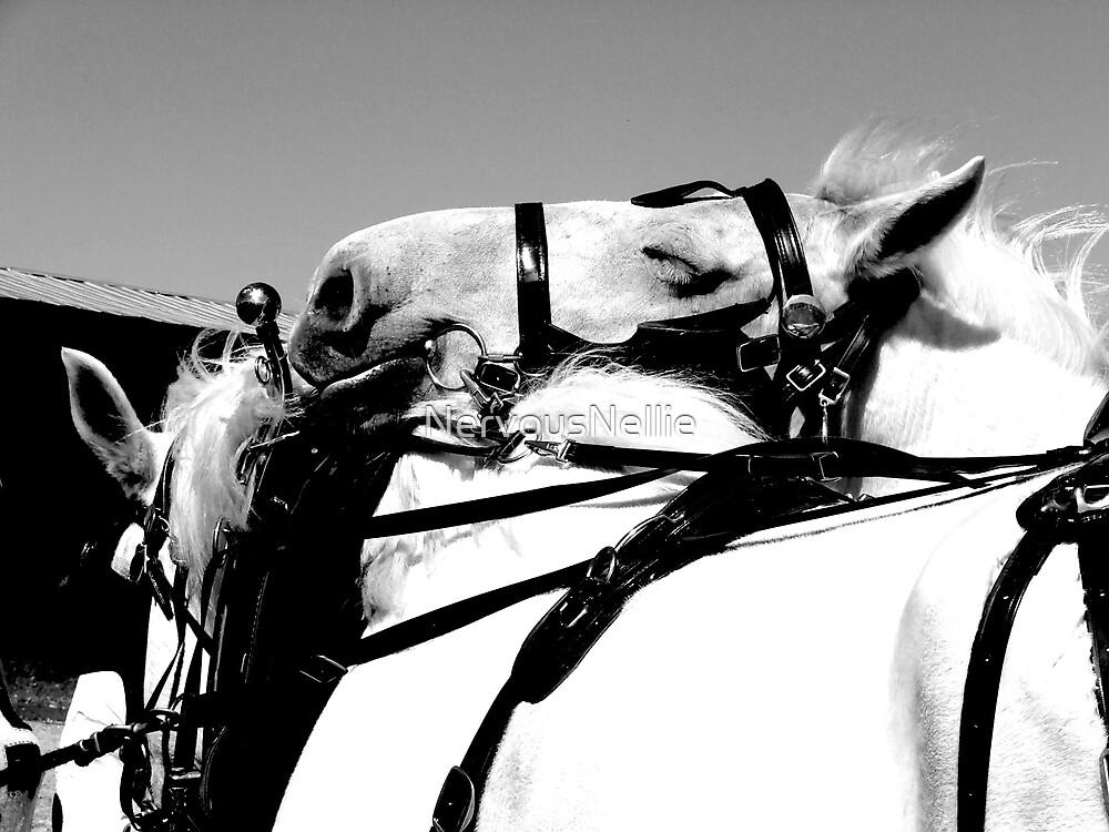 Sleepy Horse by NervousNellie