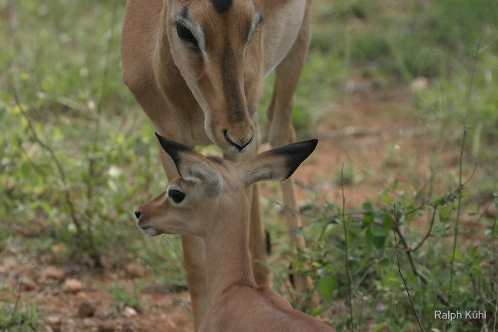 Mothers Love by Ralph Kühl