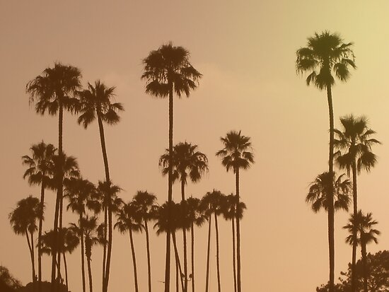 sunset palm trees posters by jack the lion redbubble