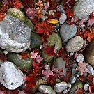 Rocks and Leaves by BILL JOSEPH