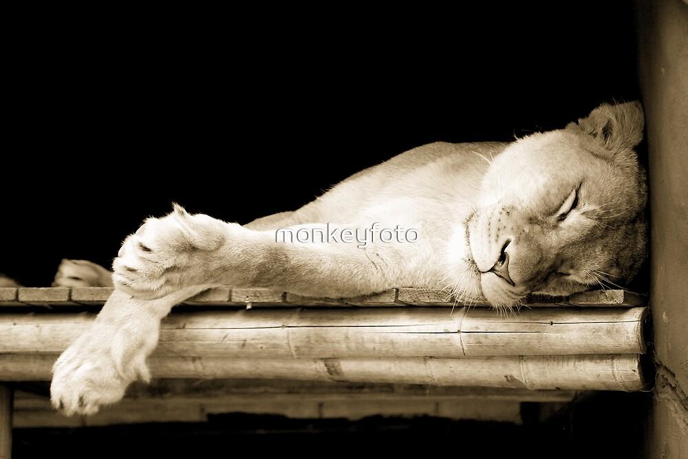 Sleeping Lioness by monkeyfoto