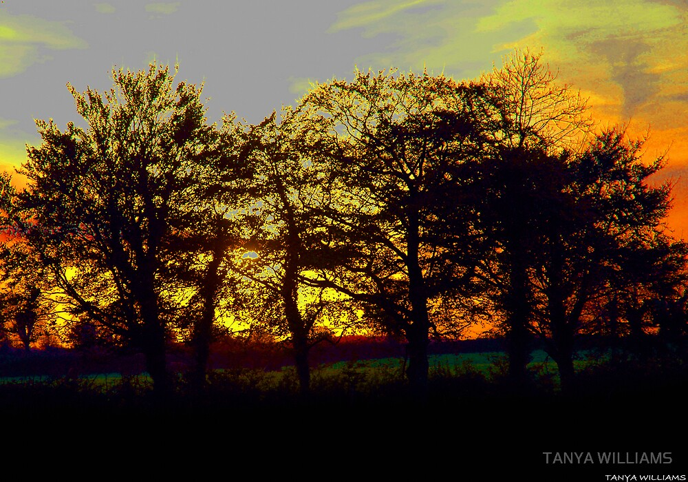 GOOD EVENING & GOODNIGHT! by TANYA WILLIAMS