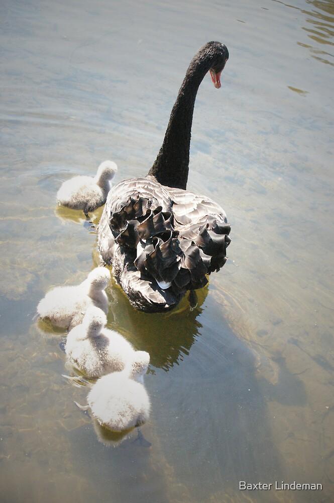 Swan Train by Baxter Lindeman