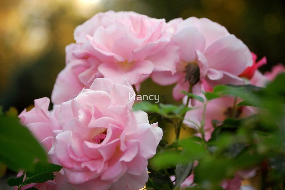 Pink Roses by Nancy