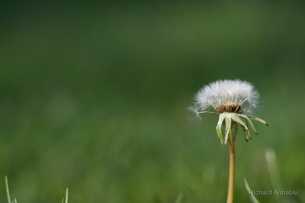 Make a wish by Richard Annable