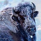 Frosty Bison Cow by Rose Vanderstap
