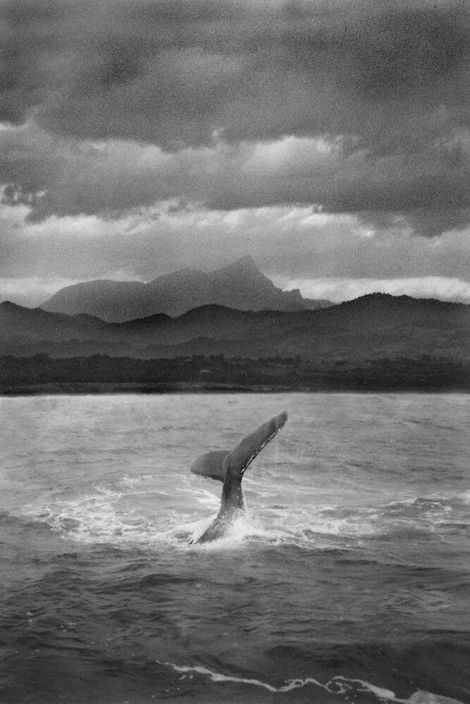 Whale at Mt Warning  by Peter Masters