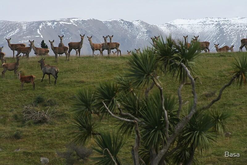 NZ Deer by Basa