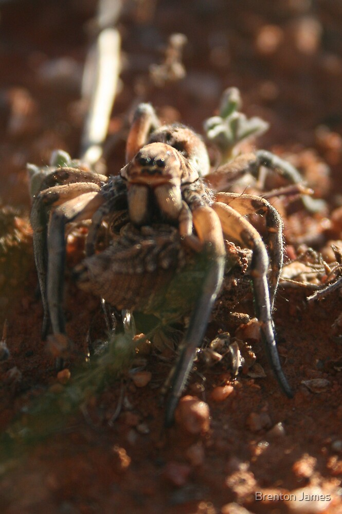 Spider Attack by Brenton James