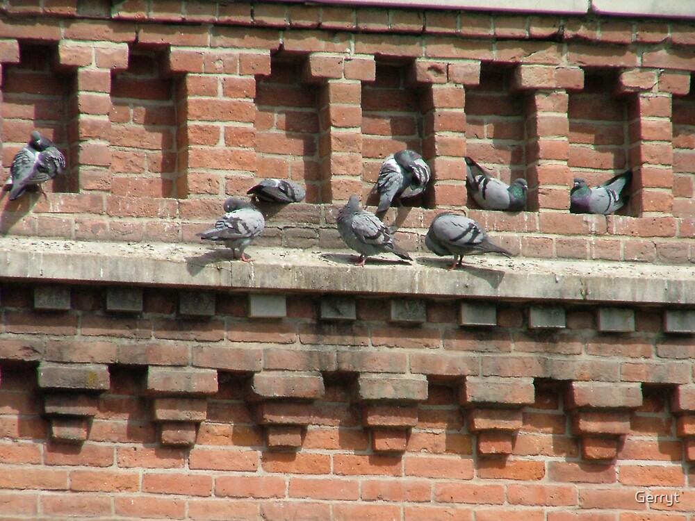 Pigeon Holes by Gerryt