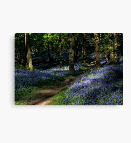 Fishgarths Wood Bluebells Canvas Print