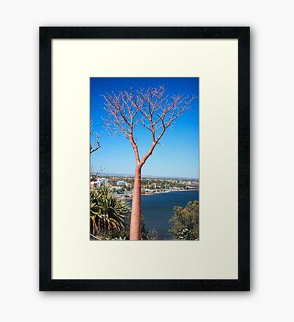 Boab Tree Framed Print