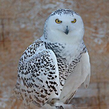 Snowy Owl by stofftoy