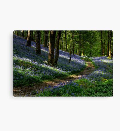 Pathway through the Bluebells Canvas Print