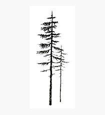 Pine trees - Black ink Photographic Print