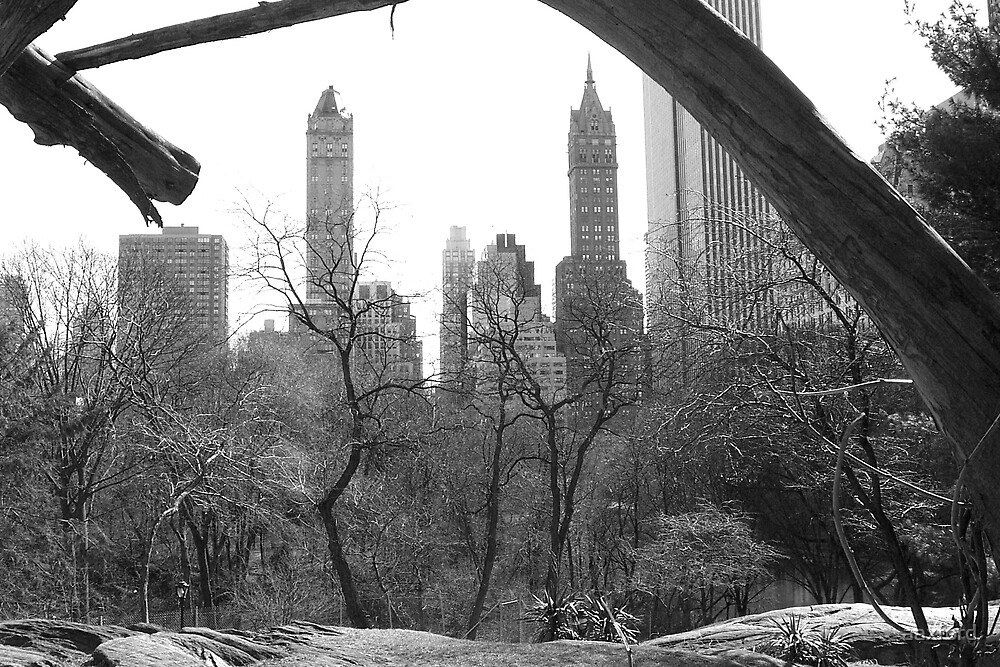 Central Park, New York by aaxford