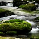 Mossy River Rocks by Gary L   Suddath