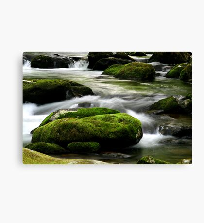 Mossy River Rocks Canvas Print
