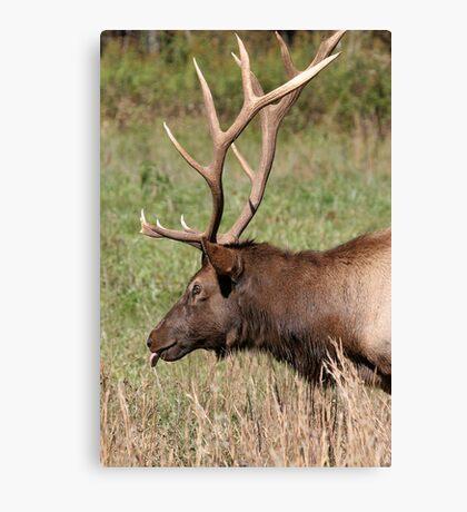 Elegant Elk Canvas Print