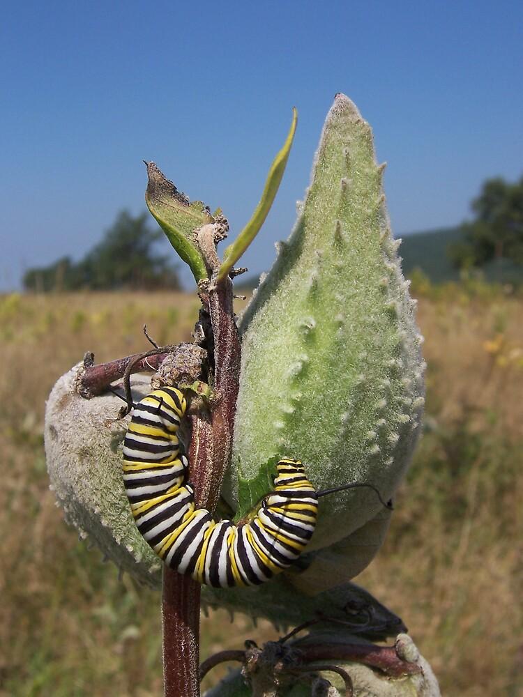 Caterpillar by Elf2004