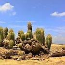 Cactus by heinrich