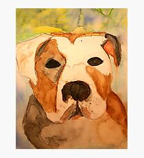 Pit Bull Watercolor Photographic Print