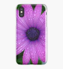 Purple African Daisy with Raindrops iPhone Case