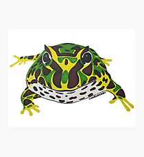 Pac Man Frog Photographic Print