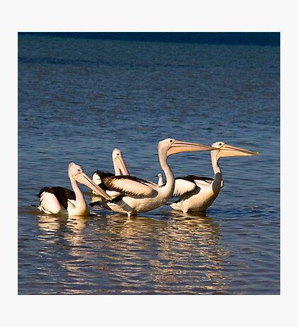 Pelican Dance Photographic Print