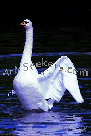 Swan 3 by a2zidxdotcom