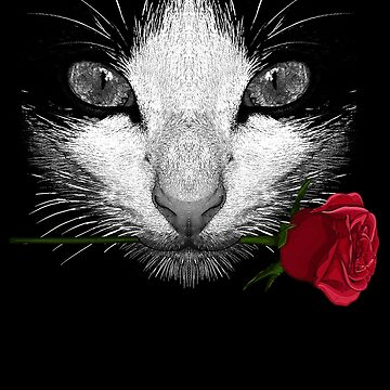 Black Cat by moncheng