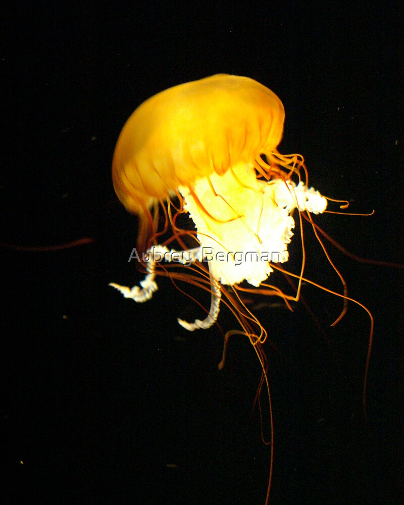 The glowing jelly fish by Aubrey  Bergman