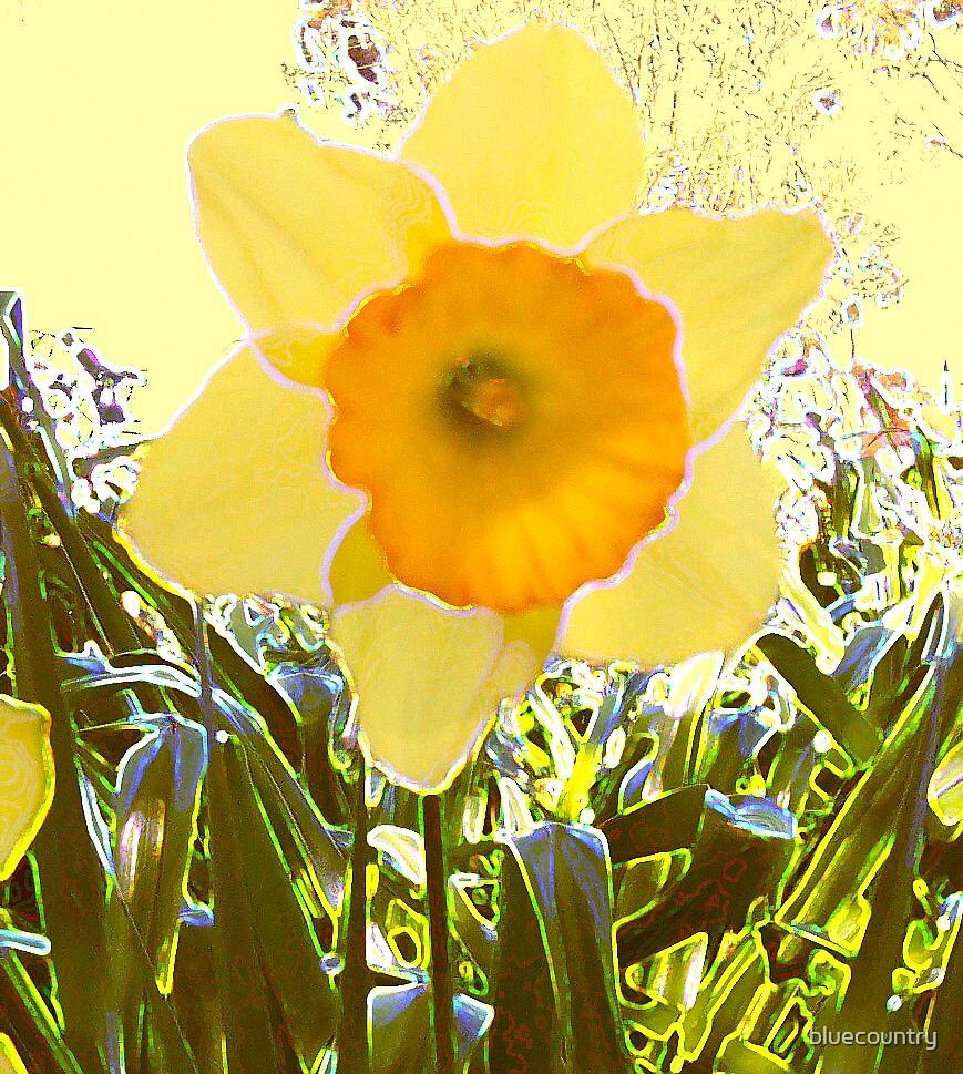 Daffodil by bluecountry