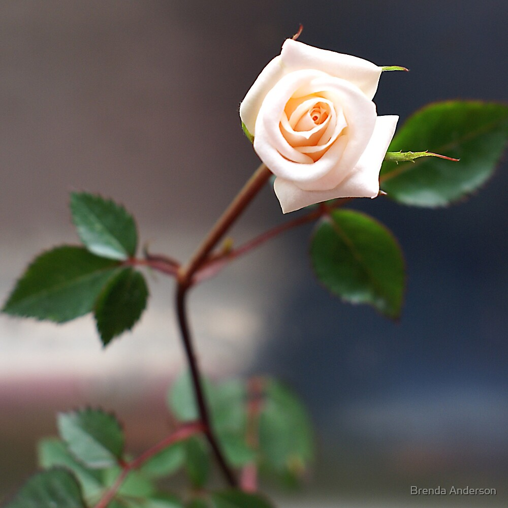 rose, in miniature by Brenda Anderson
