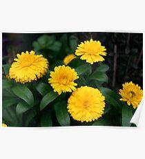 Yellow Chrysanthemum III Poster